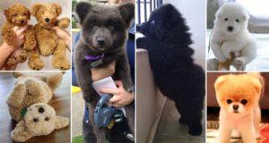 Cute Puppies Teddy Bears