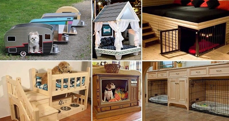 Pics Of Cool Dog Houses