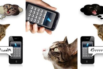 Human-To-Cat Translator App