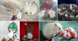 Lab Animals Rehomed