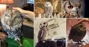 Owl Bar London England