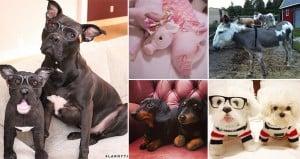 Plush toy Clones Of Pets