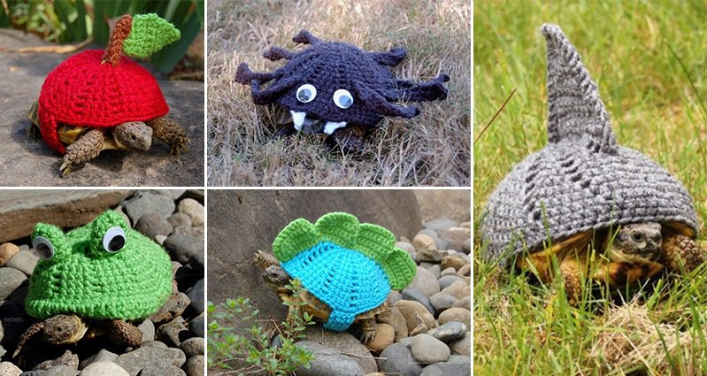 Knitting Pattern For Tortoise Jumper : These Awesome Sweater Wearing Tortoises Are Just Too Cute