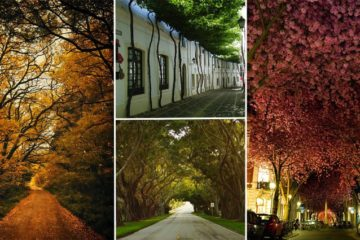 Streets shaded by trees and flowers