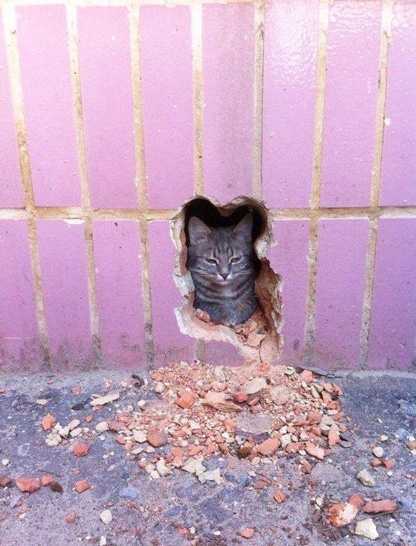 almost-perfect-cat
