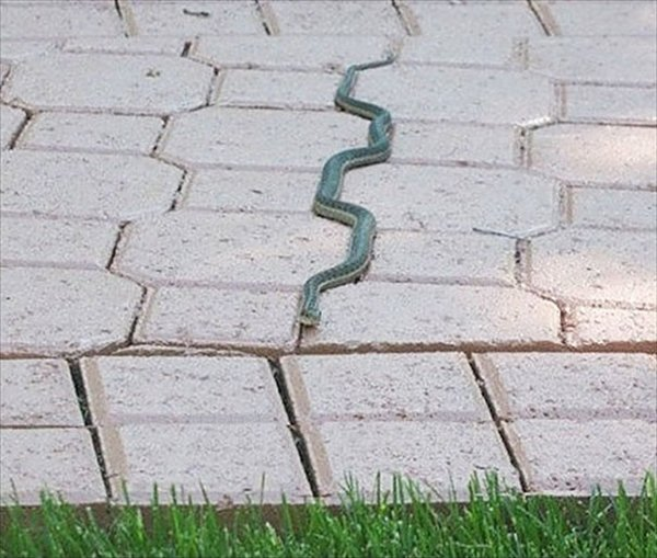 almost-perfect-snake