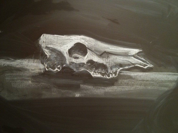 animal skull chalked picture