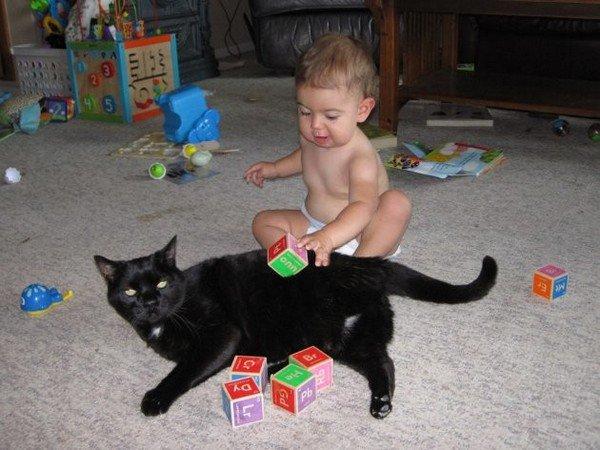 baby bricks cat