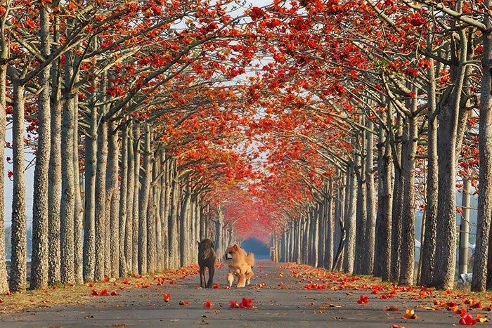 beautiful-streets-taiwan
