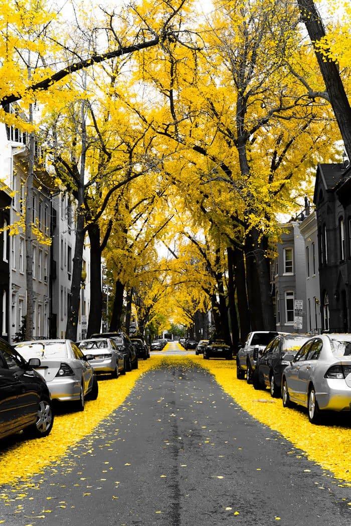 beautiful-streets-washington-dc