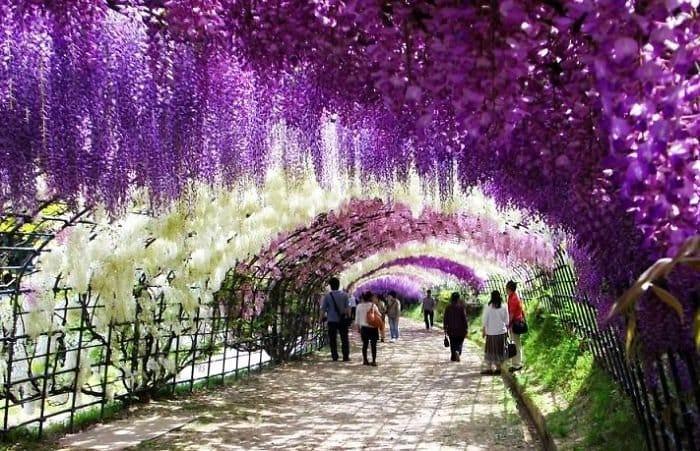 beautiful-streets-wisteria