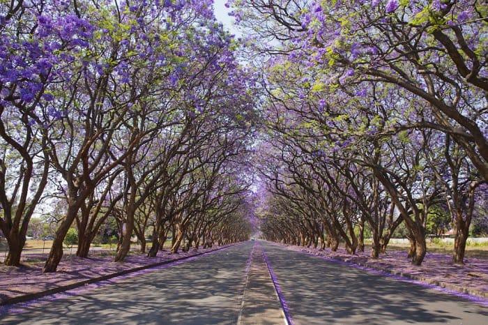 beautiful-streets-zimbabwe
