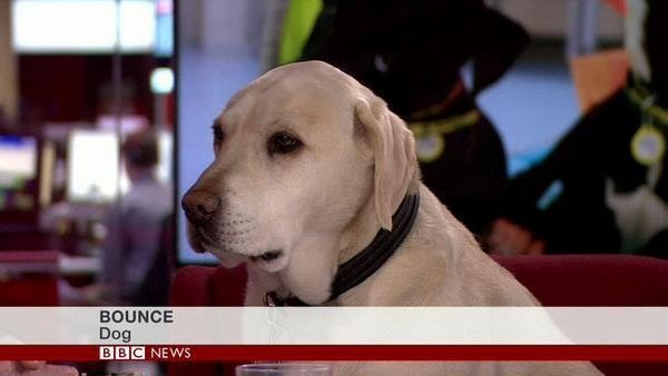 bounce dog