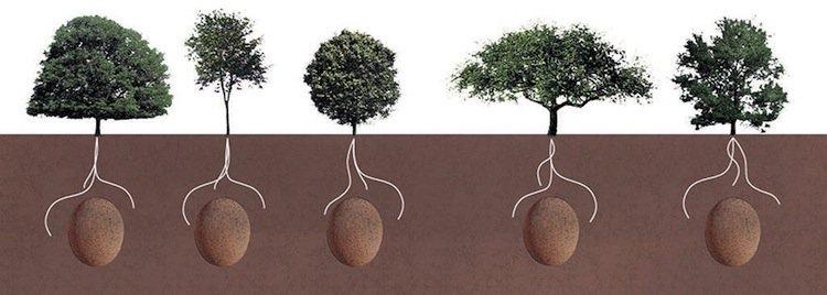 burial-tree