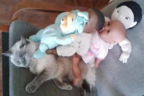 cat baby dolls