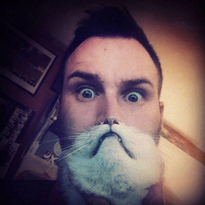 cat beard big eyes