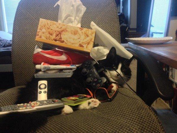 cat covered in stuff