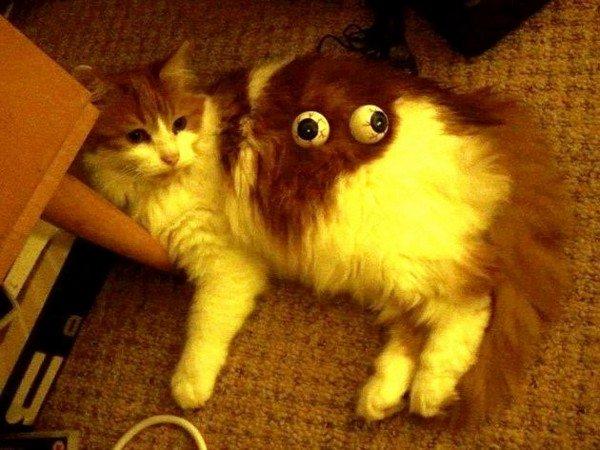 cat googly eyes
