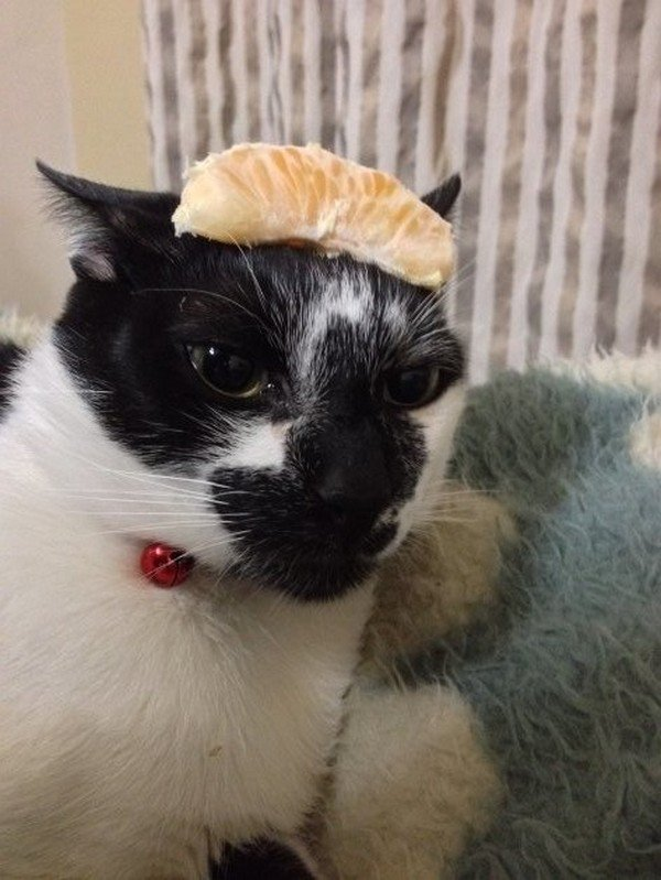 cat orange slice on head