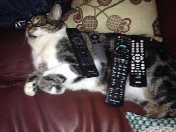 cat remotes