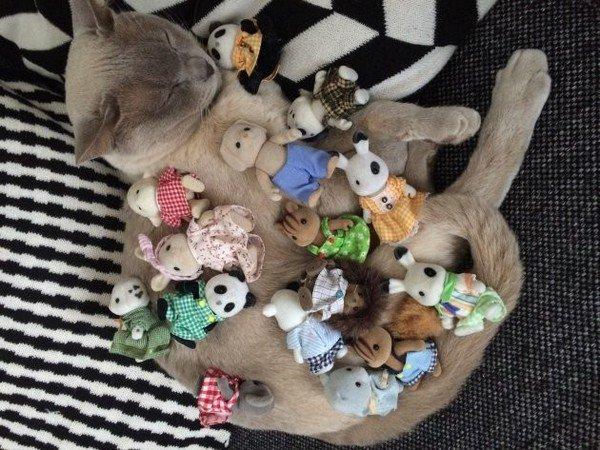 cat sylvanian families