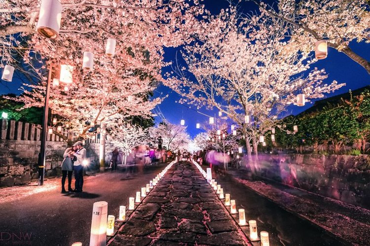 cherry-blossom-lantern-festival