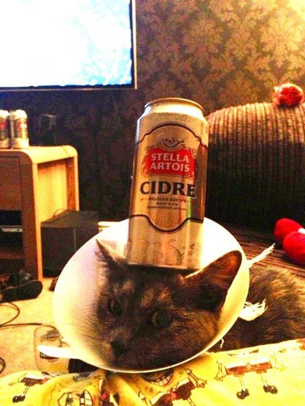cider can cat