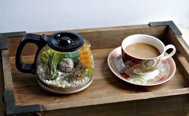 coffee-pot-terrarium