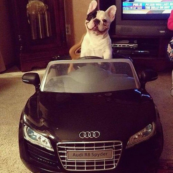 Funny Facial Expressions Celebrity These Rich Dogs From I...