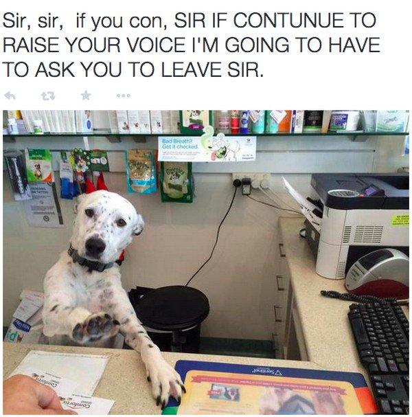 dog desk