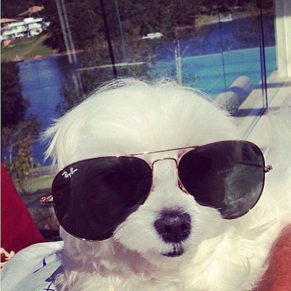 These Rich Dogs From Instagram Have A More Extravagant