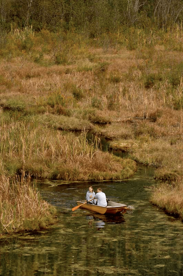 forest-boat