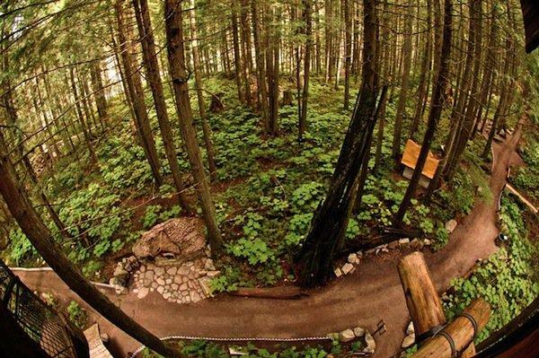 forest-monashee