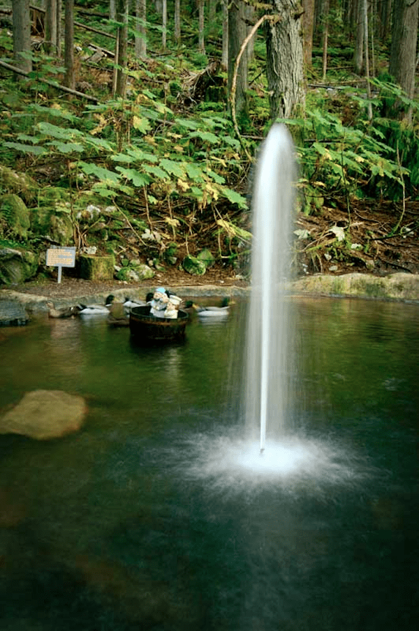 forest-water