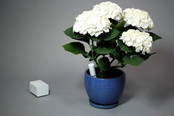 garden-plant-link