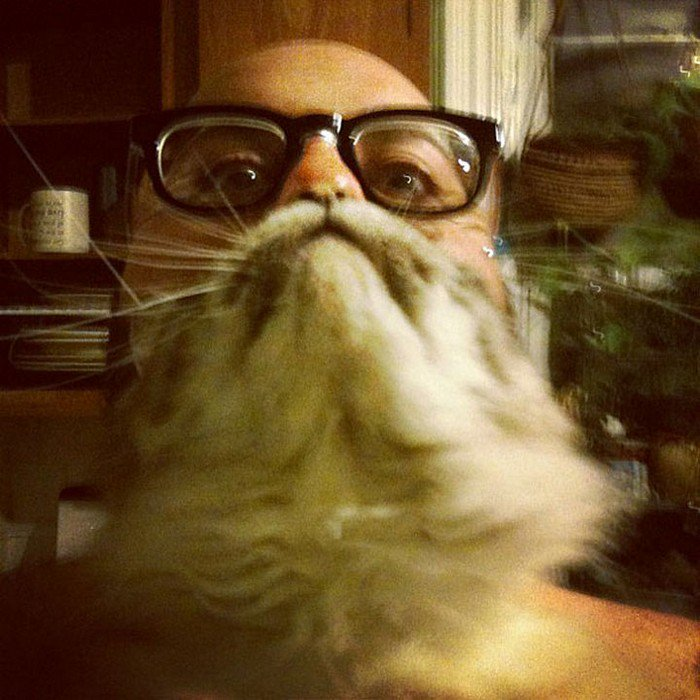 glasses man cat beard