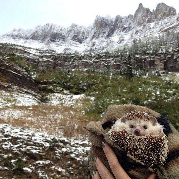 hedgehog cover outside