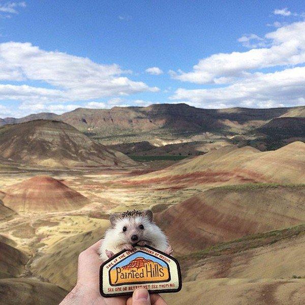 hedgehog painted hills