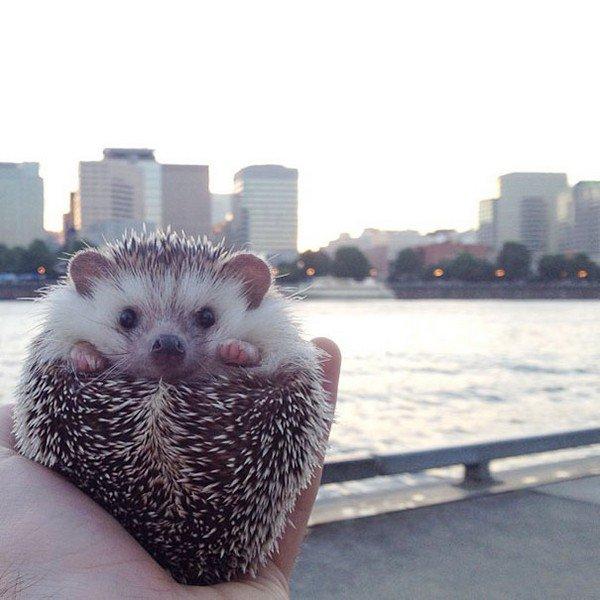 hedgehog skyscrapers