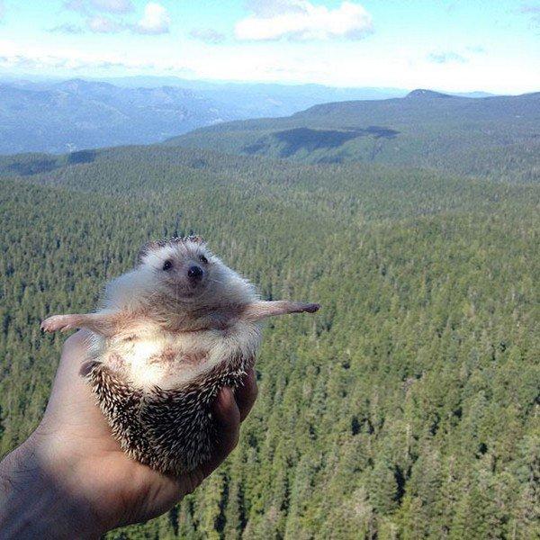 hedgehog stretched arms f