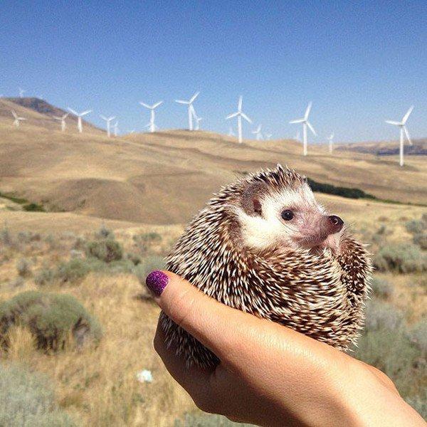 hedgehog windfarm