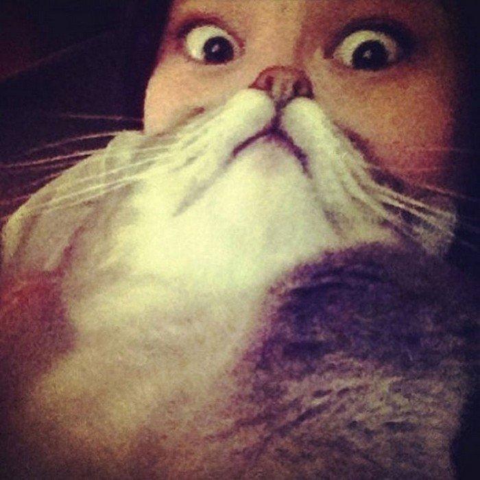 huge eyes cat beard