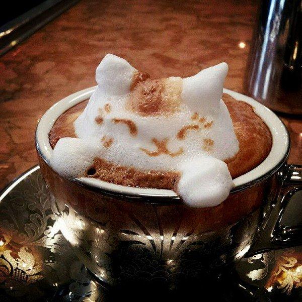 latte cat