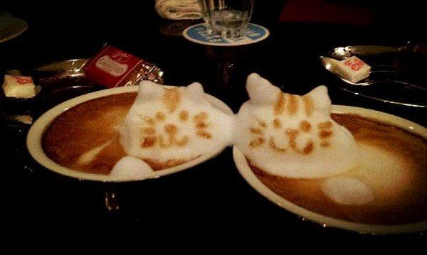 latte cats