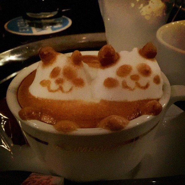 latte pandas