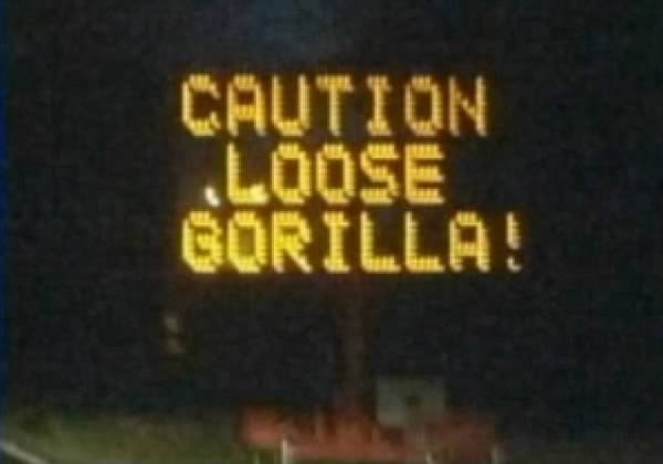 loose gorilla sign
