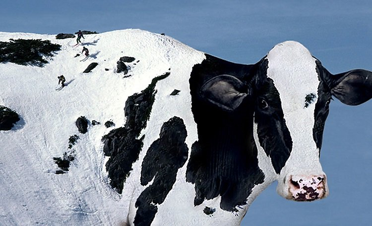 photo-manipulation-cow-mountain
