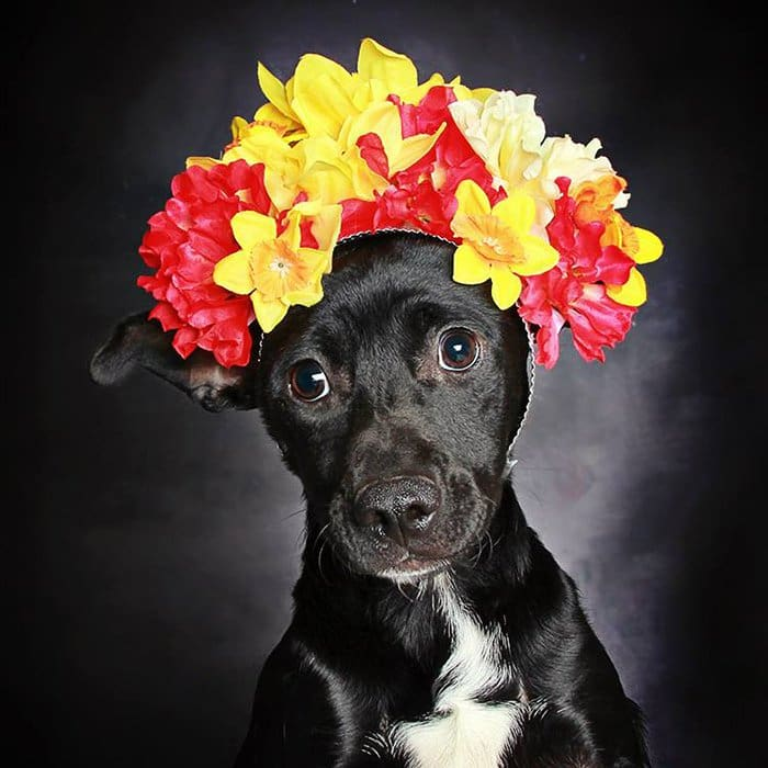 Rafiki Dog With Flowers Gato Triste Imagenes Perritos Con