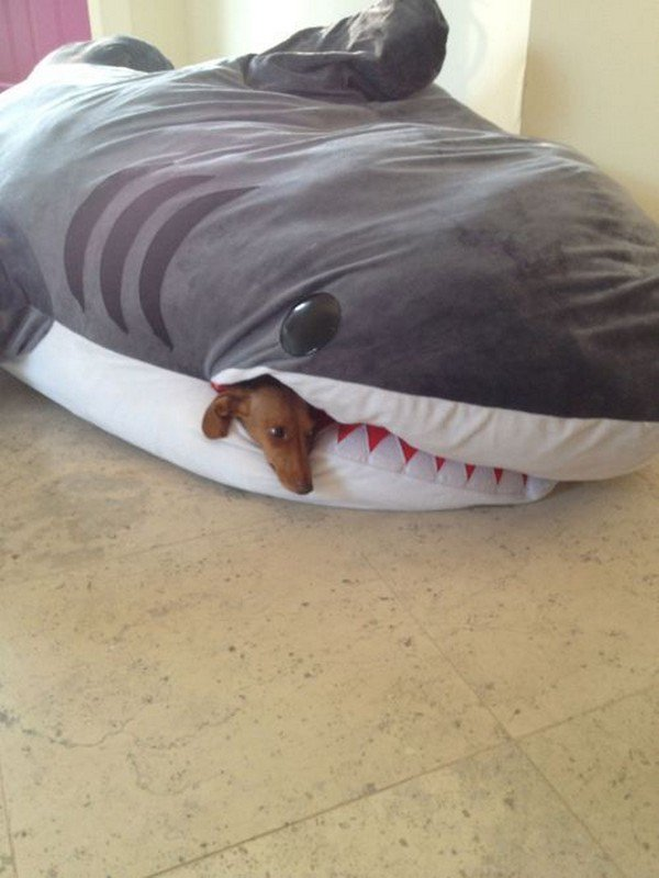 Cute Shark Pillow : 13 Of The Coolest Beds Every Dog Would Love