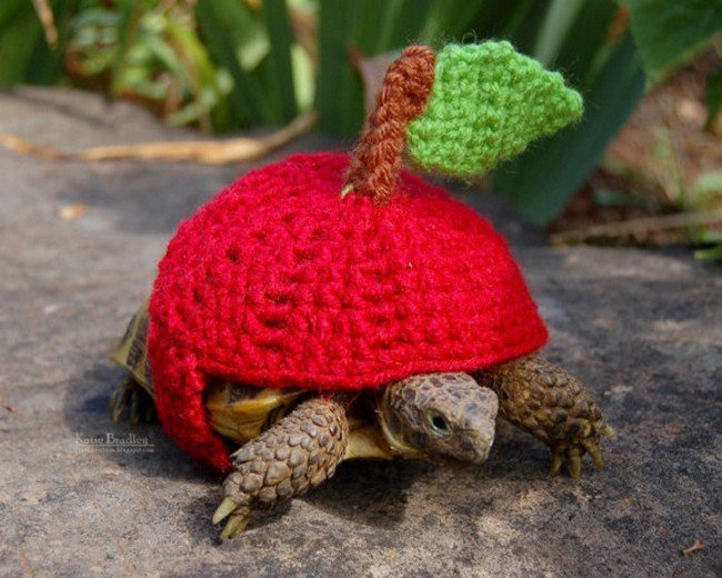 These Awesome Sweater Wearing Tortoises Are Just Too Cute Frog Puns